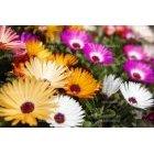 봄꽃색깔소풍
