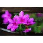 봄꽃 색깔 보라색 소풍