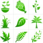 식물 픽토그램 3