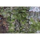 나무껍질3