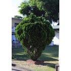 나무 10