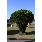 나무 11