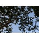 나무 30