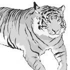 호랑이 5