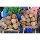 코코넛열매 4