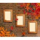 가을이미지 4