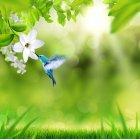 봄이미지 21