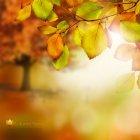 가을이미지 23