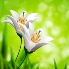봄이미지 29