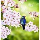 봄이미지 36