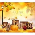 가을이미지 102