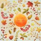 가을이미지 99