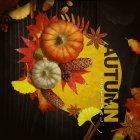 가을이미지 109