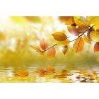 가을이미지 121