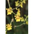 노란꽃 126
