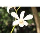 꽃 111
