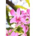 꽃 112