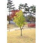 고궁안 나무33