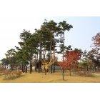 고궁안 나무31