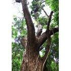 나무/숲_6