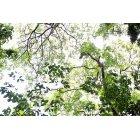 나무/숲_1