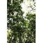 나무/숲_5
