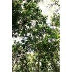 나무/숲_8