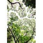나무/숲_11