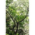 나무/숲_12