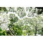 나무/숲_13