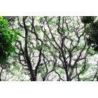 나무/숲_100