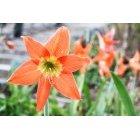 꽃 159