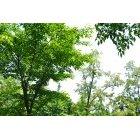 나무 103