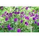 꽃 164
