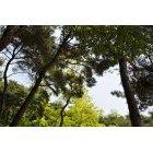 나무/숲_102