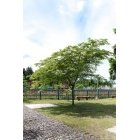 나무 51