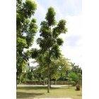 나무 56