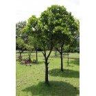 나무 35