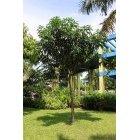 나무 31
