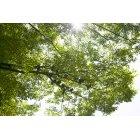 나무 102