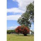 나무 306
