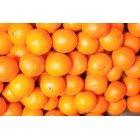 오렌지 36