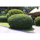 나무 384