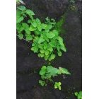 나뭇잎 165