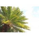 나무 2000