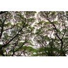 나무/숲 103