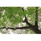 나무/숲 102