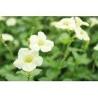 꽃 265