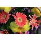 꽃 268