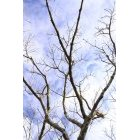 나무 610